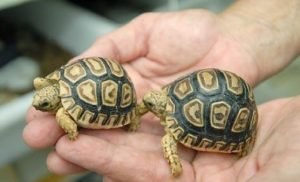 pet-turtles_011