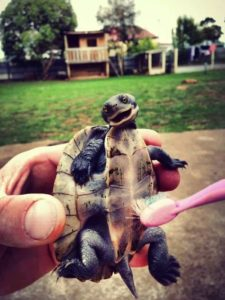 pet-turtles_013