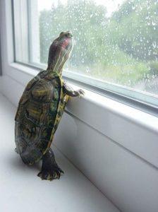 pet-turtles_015