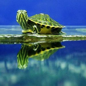 pet-turtles_016