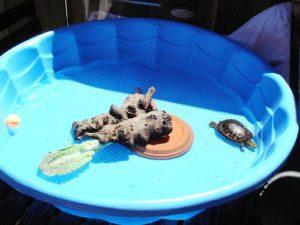 pet-turtles_019
