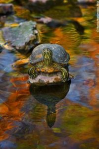 pet-turtles_021