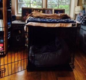 dog-crates-14