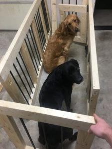 dog-crates-60