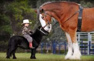 beautiful-horse-pictures-and-photos-gallery-10