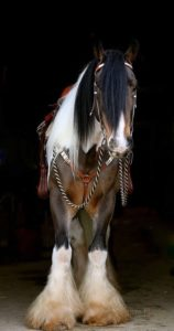 beautiful-horse-pictures-and-photos-gallery-11