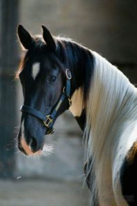 beautiful-horse-pictures-and-photos-gallery-14