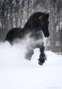 beautiful-horse-pictures-and-photos-gallery-19