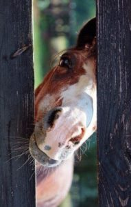 beautiful-horse-pictures-and-photos-gallery-2