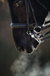 beautiful-horse-pictures-and-photos-gallery-20