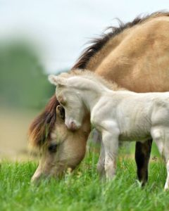 beautiful-horse-pictures-and-photos-gallery-22