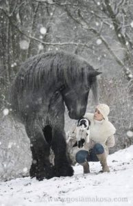 beautiful-horse-pictures-and-photos-gallery-25
