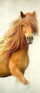 beautiful-horse-pictures-and-photos-gallery-26