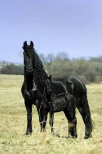 beautiful-horse-pictures-and-photos-gallery-28