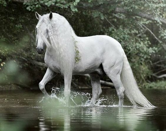 beautiful-horse-pictures-and-photos-gallery-29