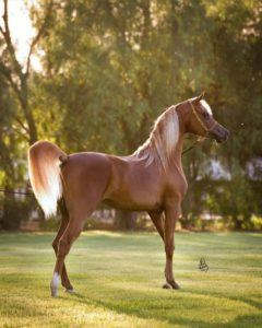 beautiful-horse-pictures-and-photos-gallery-8