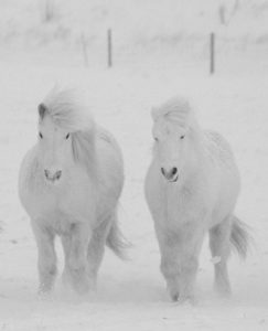 beautiful-horse-pictures-and-photos-gallery-9