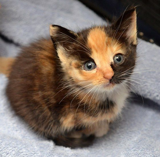 cute-cat-pictures-adorable-kitten-11