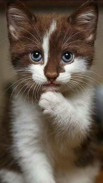 cute-cat-pictures-adorable-kitten-14