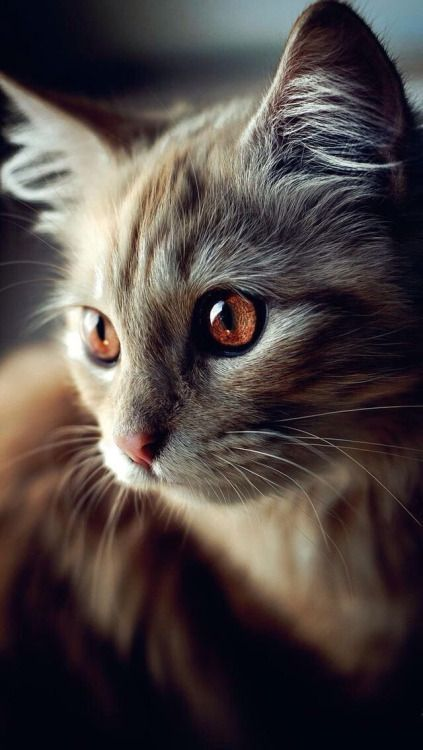cute-cat-pictures-adorable-kitten-16