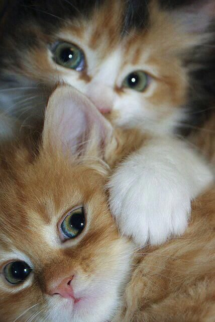 cute-cat-pictures-adorable-kitten-20
