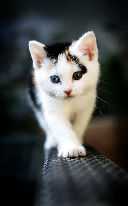 cute-cat-pictures-adorable-kitten-24