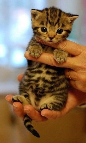 cute-cat-pictures-adorable-kitten-29