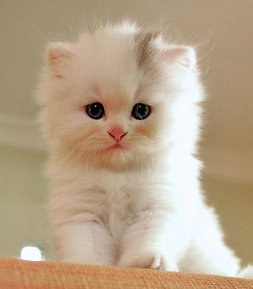 cute-cat-pictures-adorable-kitten-30