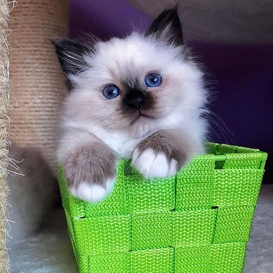 cute-cat-pictures-adorable-kitten-4