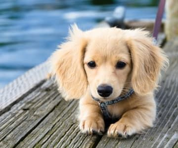 cutest-dog-breeds-most-adorable-dogs-10