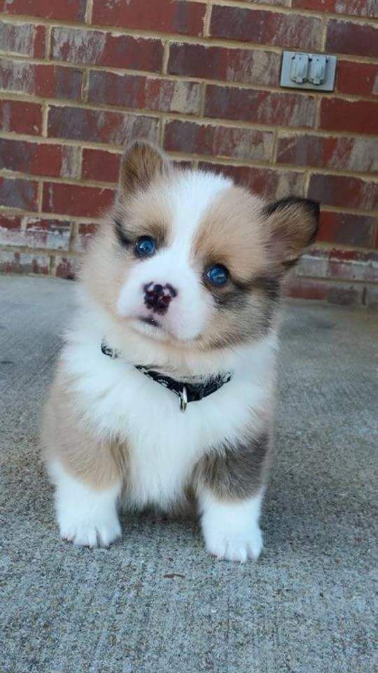 cutest-dog-breeds-most-adorable-dogs-16