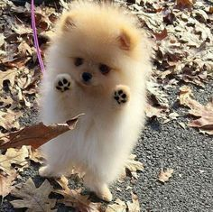 cutest-dog-breeds-most-adorable-dogs-17