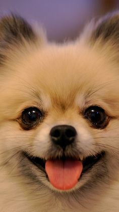 cutest-dog-breeds-most-adorable-dogs-25