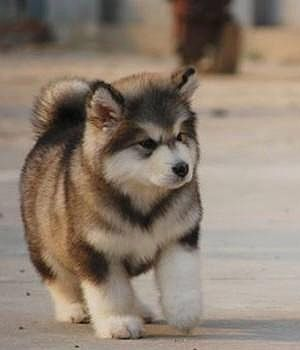 cutest-dog-breeds-most-adorable-dogs-27