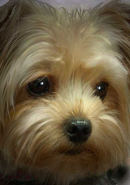 cutest-dog-breeds-most-adorable-dogs-3