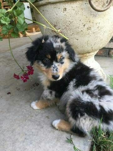 cutest-dog-breeds-most-adorable-dogs-4