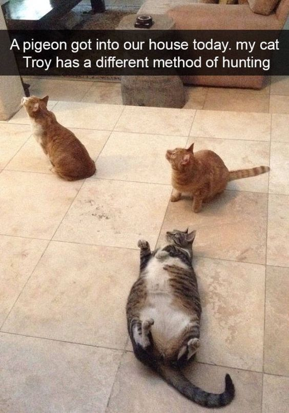 funny-animal-pictures-of-the-day-14