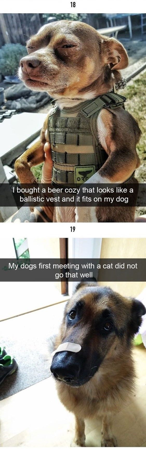 funny-animal-pictures-of-the-day-16