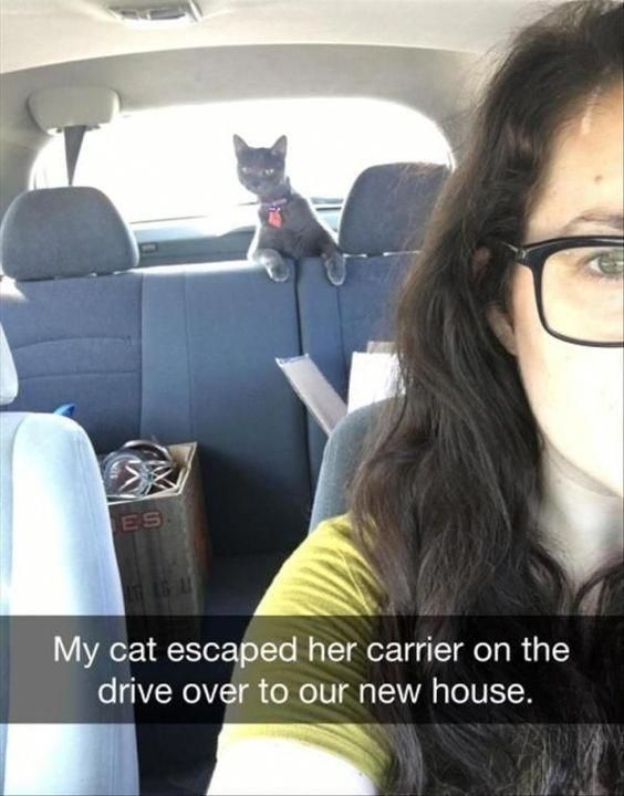 funny-animal-pictures-of-the-day-22