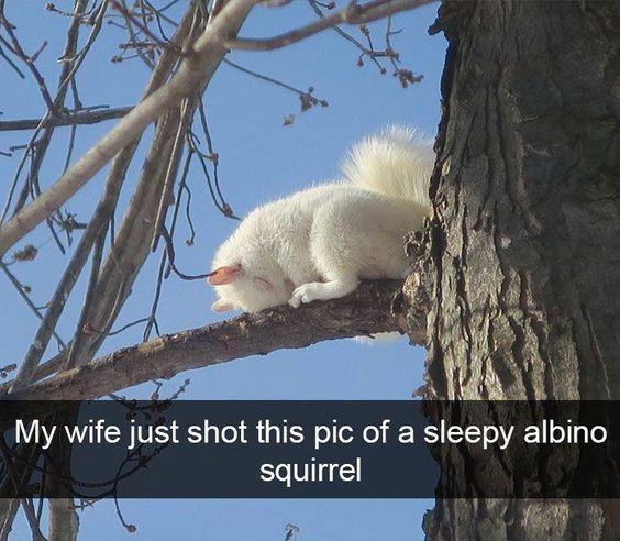 funny-animal-pictures-of-the-day-24