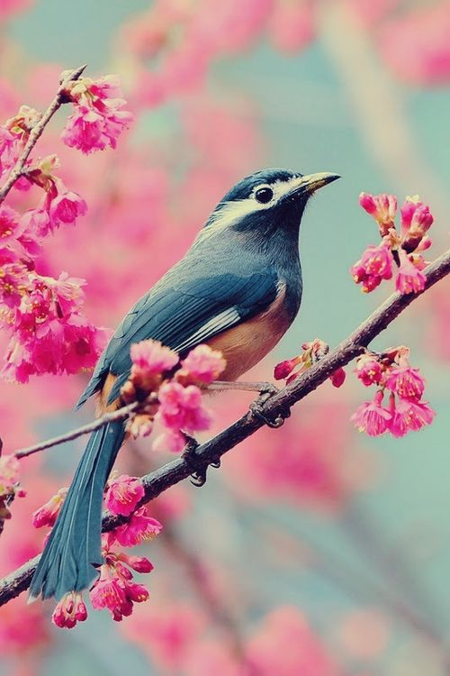unique-images-of-birds-you-will-love-10