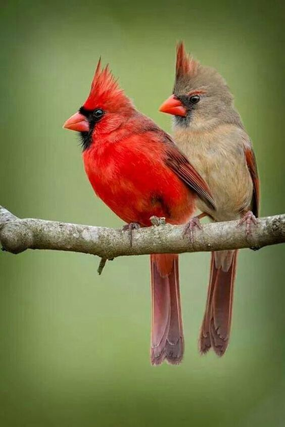 unique-images-of-birds-you-will-love-18