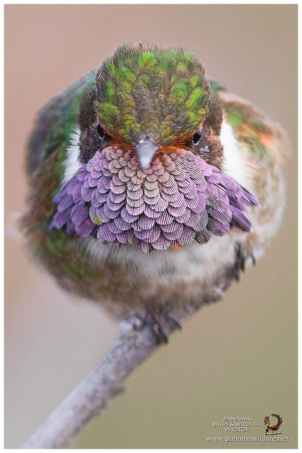 unique-images-of-birds-you-will-love-19