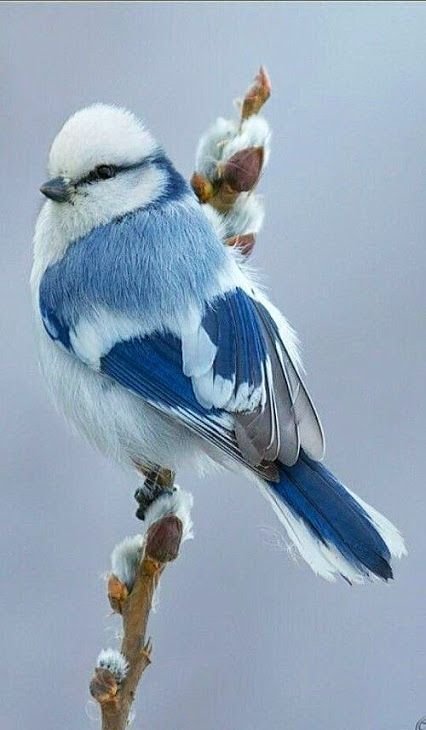 unique-images-of-birds-you-will-love-37