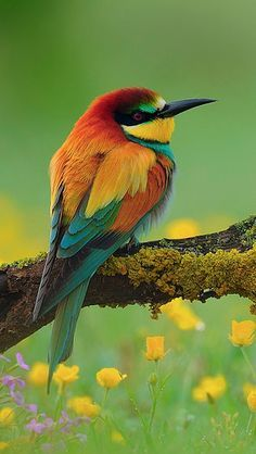 unique-images-of-birds-you-will-love-55