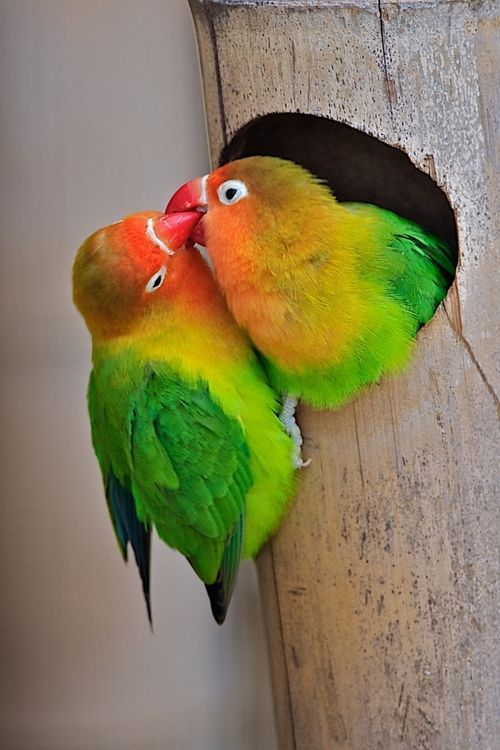 unique-images-of-birds-you-will-love-6