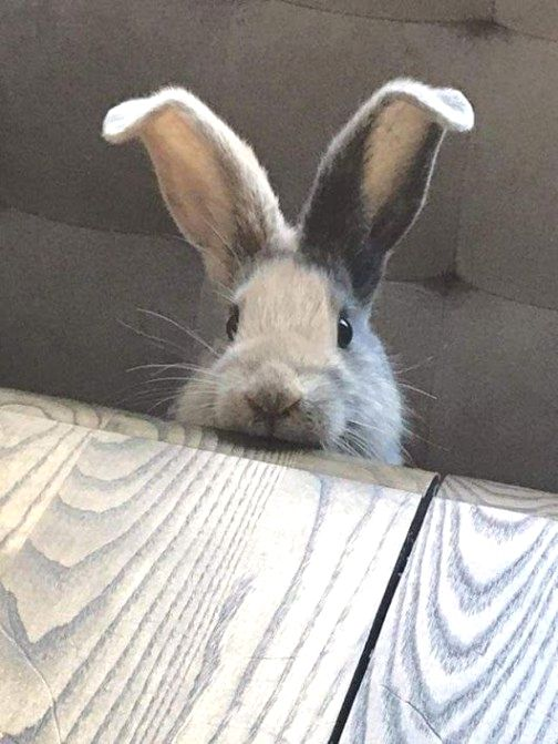 bunny-memes-and-photos-that-will-warm-your-heart-10