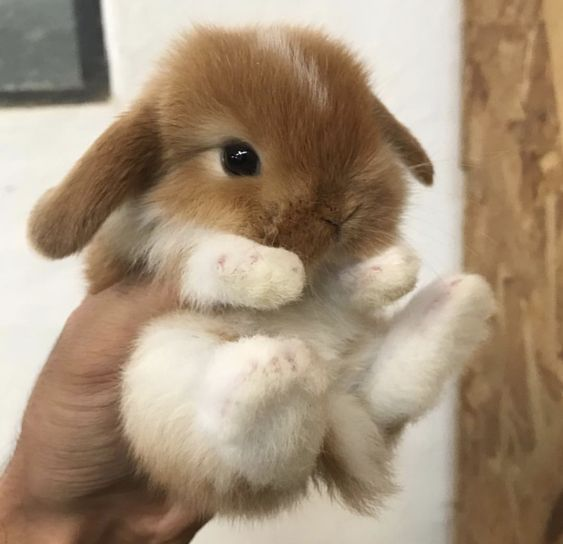 bunny-memes-and-photos-that-will-warm-your-heart-12
