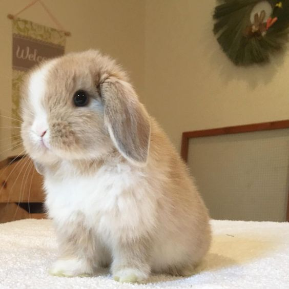 bunny-memes-and-photos-that-will-warm-your-heart-15