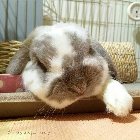 bunny-memes-and-photos-that-will-warm-your-heart-16